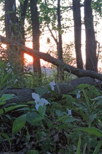 Sunset in the Hollow Woods